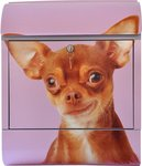 Die Briefkastenfirma Chihuahua brievenbus