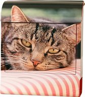 Die Briefkastenfirma Kat brievenbus